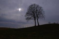 De wind van de winter stock foto