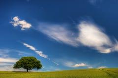 De wind van de zomer Stock Fotografie