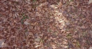 De wind van de herfstbladeren stock footage