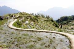 De windende weg op het terras Royalty-vrije Stock Foto