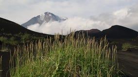 De windgolven het gras tegen de achtergrond van de vulkaan stock videobeelden