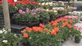 De winkel van de bloem Boeketten en bloempotten stock video