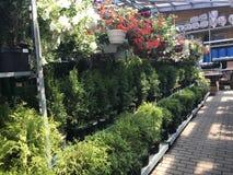 De winkel van de bloem Heldere bloemen en groene die installatiestribune in potten op planken en dienbladen in de opslag wordt in Royalty-vrije Stock Foto
