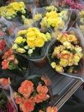 De winkel van de bloem Heldere bloemen en groene die installatiestribune in potten op planken en dienbladen in de opslag wordt in Royalty-vrije Stock Afbeelding
