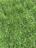 De winkel van de bloem Heldere bloemen en groene die installatiestribune in potten op planken en dienbladen in de opslag wordt in Royalty-vrije Stock Fotografie