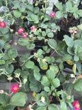 De winkel van de bloem Heldere bloemen en groene die installatiestribune in potten op planken en dienbladen in de opslag wordt in Stock Foto