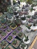 De winkel van de bloem Heldere bloemen en groene die installatiestribune in potten op planken en dienbladen in de opslag wordt in Stock Afbeeldingen