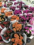 De winkel van de bloem Heldere bloemen en groene die installatiestribune in potten op planken en dienbladen in de opslag wordt in Stock Fotografie