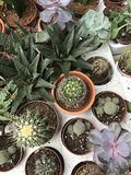 De winkel van de bloem Heldere bloemen en groene die installatiestribune in potten op planken en dienbladen in de opslag wordt in Stock Afbeelding
