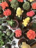 De winkel van de bloem Heldere bloemen en groene die installatiestribune in potten op planken en dienbladen in de opslag wordt in Stock Foto's