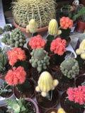 De winkel van de bloem Heldere bloemen en groene die installatiestribune in potten op planken en dienbladen in de opslag wordt in Royalty-vrije Stock Foto's