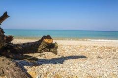 De winkelhaak ligt op het strand op een zonnige dag Stock Foto