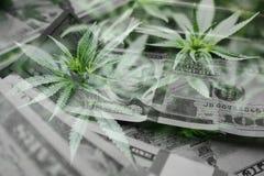 De Winsten van de marihuanaindustrie met Cannabisbladeren met Hoog Geld - kwaliteit stock illustratie