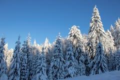 De winter in één foto Groot! stock foto
