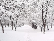 De winter 1 Stock Afbeelding