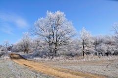 De winter. Royalty-vrije Stock Afbeeldingen