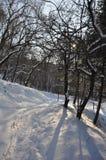 De winter Stock Afbeelding