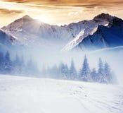 De winter Royalty-vrije Stock Fotografie