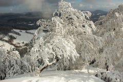 De winter, Royalty-vrije Stock Afbeeldingen