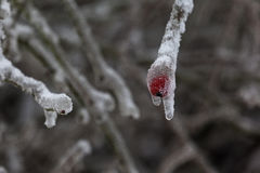De winter 21 Royalty-vrije Stock Fotografie