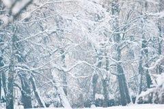 De winter achtergrondlandschapsmening Royalty-vrije Stock Foto's
