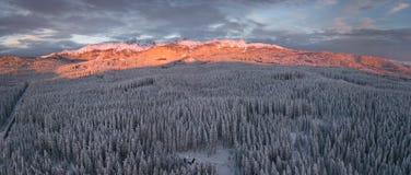 De winter alpien bos in Pokljuka Slovenië omvat in sneeuw bij dageraad royalty-vrije stock fotografie