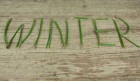 De winter Altijdgroene Twijgen op Rustieke Houten Raad Royalty-vrije Stock Foto's