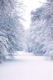De winter in Bürgerpark Bremen, Duitsland Royalty-vrije Stock Afbeeldingen