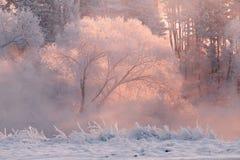De winter background royalty-vrije stock afbeelding