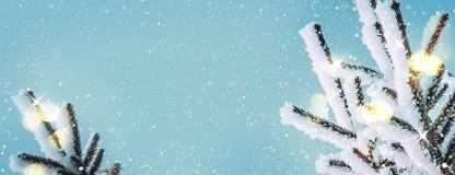 De winter background Natuurlijke naaldtakken in rijp met lichten stock foto's