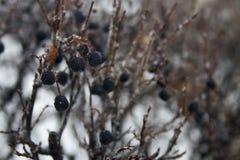 De winter behandelde vallei in Spearfish, BR Royalty-vrije Stock Afbeeldingen