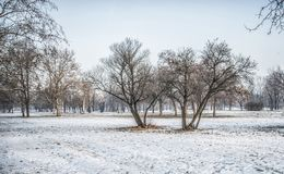 De winter in Belgrado Royalty-vrije Stock Foto