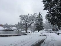 De winter is benieuwd Stock Afbeelding