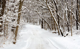 De winter berijpte bomen Stock Foto
