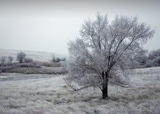 De winter Berijpte boom royalty-vrije stock fotografie