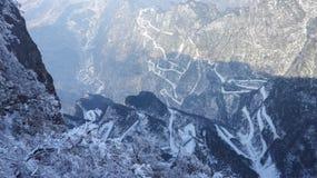 De winter bevroren groene bladeren, textuur, achtergrond stock foto