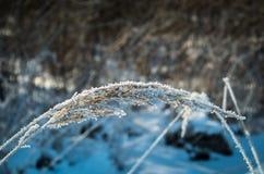De winter bevroren installatie royalty-vrije stock foto