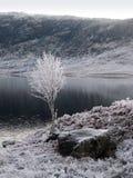 De winter bij Nauwe vallei Garry, Schotland Stock Fotografie