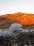 De winter bij Nauwe vallei Garry, Schotland Royalty-vrije Stock Foto's