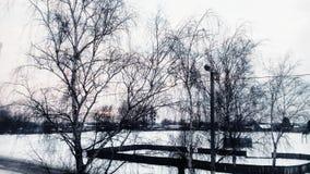 De winter Bomen Royalty-vrije Stock Fotografie