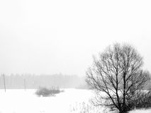De winter. Bomen. Een sneeuwval. Royalty-vrije Stock Afbeelding