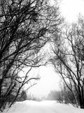 De winter. Bomen. Een sneeuwval. stock afbeelding