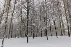 De winter, bomen, sneeuw Stock Afbeelding