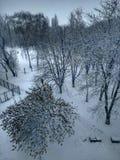 De winter De bomen zijn behandeld met sneeuw Witte sneeuw stock afbeelding