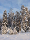 De winter in bos Royalty-vrije Stock Foto