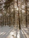 De winter in bos Royalty-vrije Stock Afbeeldingen