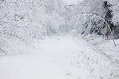 De winter in bos Stock Foto