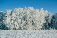 de winter bos en snow-covered gebied Stock Afbeelding