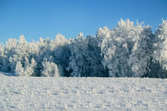 de winter bos en snow-covered gebied Stock Foto's