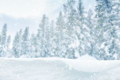 De winter bosachtergrond Stock Foto's